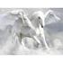 Pegasus human resource bussines solution pvt ltd Job Openings